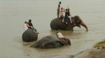 Bathing elephants/tossing tourists